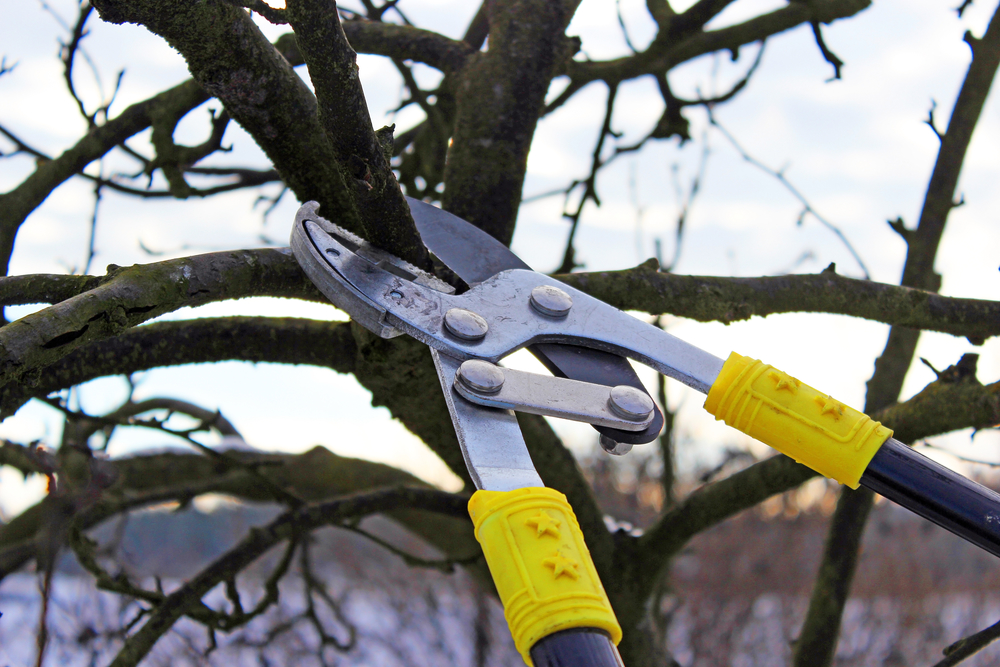 Tree Pruning - Millersville, MD