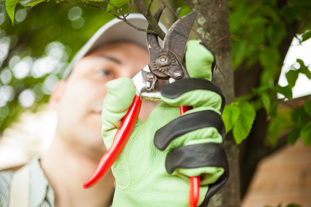 Tree Health Evaluation - Millersville, MD