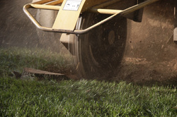 Stump Grinding | Annapolis