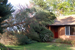 Emergence Tree Removal Services for Annapolis MD