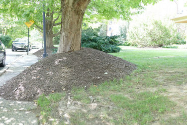 Over-mulched Tree